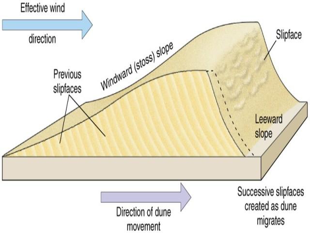 Đụn cát do gió