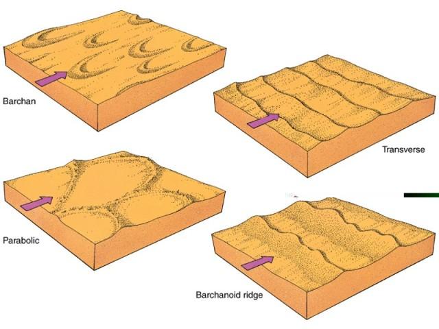 Một số kiểu đụn cát do gió
