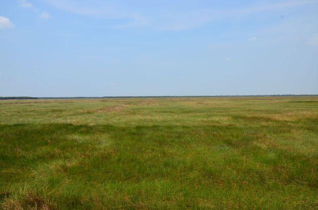 Hình 5. Mênh mông đồng cỏ (mùa khô 2015)