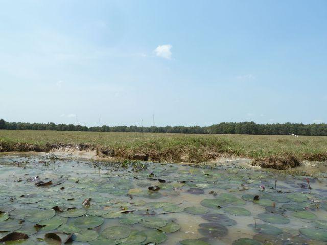 Hình 4. Một góc cảnh quan ợ Tràm chim (mùa khô 2015)
