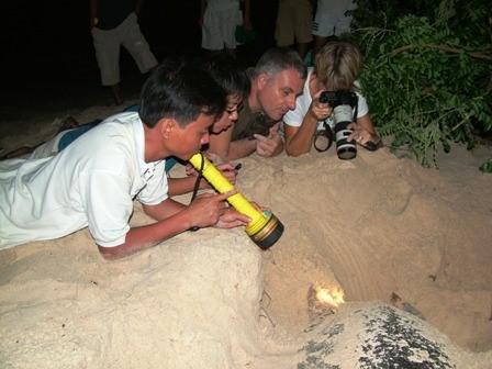 Hình 5: Du khách xem rùa đẻ trứng