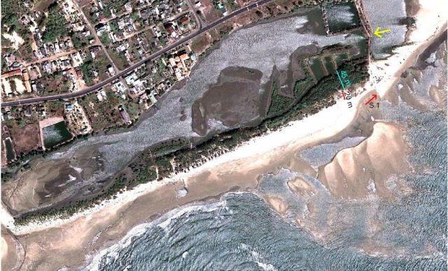 Hình 7. Bồi tụ ưu thế, bề rộng cồn cát (có phi lao) là 65 m, phần ngoài bị phủ cát là 20 m.