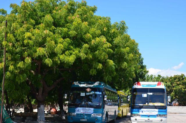 Cây neem (nim) ở Cà Ná