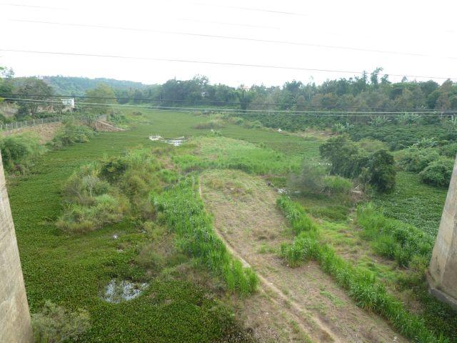 Đầm lầy hóa lòng sông dưới đập Đại Ninh