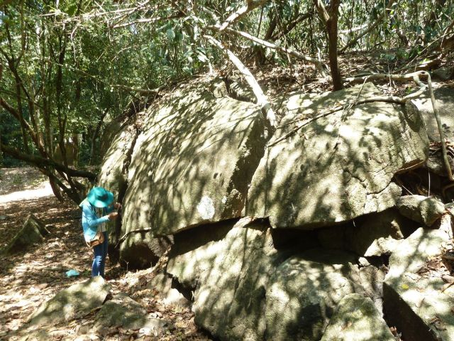 Hình 14: Hệ thống rễ cây đang tách khối đá xâm nhập