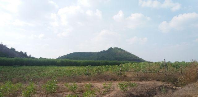 Hình 2: Núi lửa Đông Bắc nhô cao trên đồng bằng Gia Canh