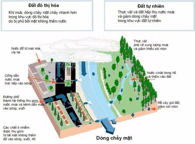 Hình 1. Minh họa bề mặt không thấm và các hệ thống thoát nước đô thị làm tăng dòng chảy mặt đến sông ngòi. Khối lượng lớn, tốc độ và thời gian dòng chảy sẽ gia tăng xói mòn và vận chuyển trầm tích từ cảnh quan và bờ sông sẽ gây tắc nghẽn kênh sông và thiệt hại môi trường sống [7].