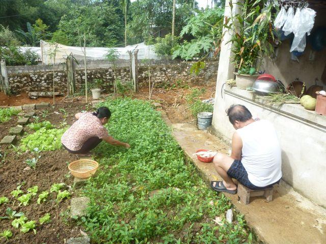 Chuẩn bị gà thả vườn và rau sạch để tiếp bạn