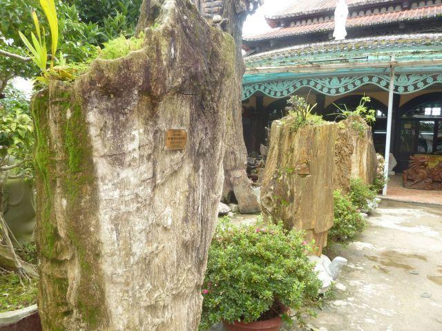Thân gỗ hóa thạch ở chùa Linh Phước, Trại Mát