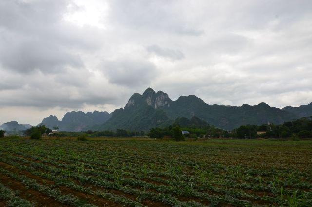 Bãi bồi trên đường từ xóm Chéo Vòng vào xóm Tay Ngai vẫn trồng rau lang và ngô như ngày xưa