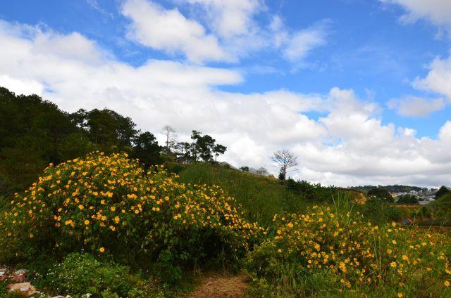 Thung lũng hoa dã quì