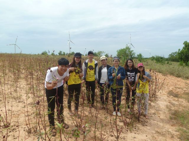Trên đồi điện gió Tuy Phong
