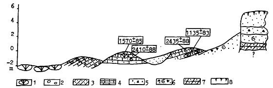 Hình 15. Cấu trúc địa chất đới bờ Nam cù lao Ré (phương vị 190o). 1: khối cát kết vôi (calcarenite) cùng với san hô; 2: cuội và sỏi; 3: calcarenite với cuội; 4: calcarenite với cát; 5: cát carbonat với mảnh vụn bazan; 6: cát carbonat với vỏ sò và mảnh vụn bazan; 7: trầm tích thành đá; 8: đất. Nguồn [2].