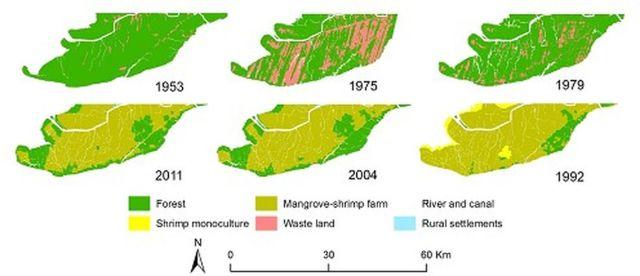Hình. 2. Bản đồ độ bao phủ đất ở Mũi Cà Mau các năm 1953, 1975, 1979, 1992, 2004 và 2011. Các bản đồ cho thấy 5 nhóm chính: (1) Rừng: Mắm, Đước và rừng hỗn giao; (2) Độc canh tôm; (3) Khu RNM-nuôi tôm; (4) Khu dân cư nông thôn; và (5) Đất hoang
