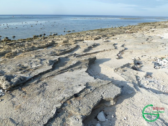 Hình 2. Các lớp cát kết san hô bãi biển phía bắc núi lửa Giếng Tiền lộ khi thủy triều xuống thấp