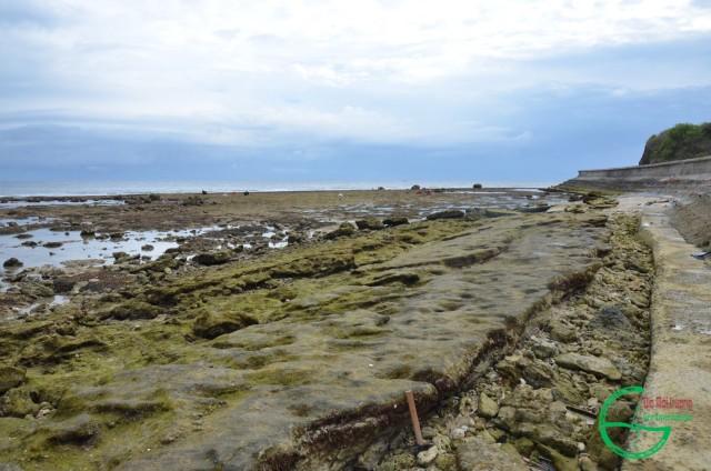Hình 5: Các lớp cát kết san hô ở bãi biển nam Hòn Vung lộ ra khi triều xuống thấp